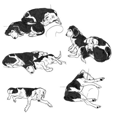 Beaglets